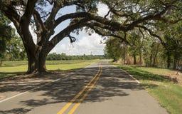 农村Backroads南方古老树路易斯安那美国 库存图片