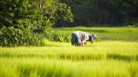 农民在最黑暗的领域工作太阳 免版税库存图片