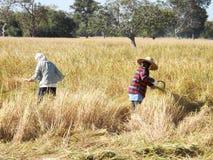 农民收获 免版税库存照片