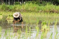 农民,农夫 免版税库存图片