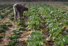 农民015 免版税库存照片