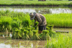 农民 免版税库存照片