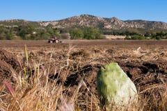 农用拖拉机犁和仙人掌 库存图片