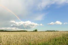 农田与彩虹、积云和麦田的夏天风景 免版税库存照片