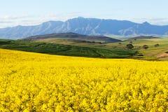 农田俯视的雪加盖的山脉 免版税库存照片