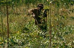 农田劳工在布隆迪。 免版税库存照片