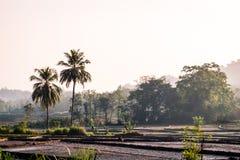 农田和森林视图在有雾的早晨 免版税库存图片