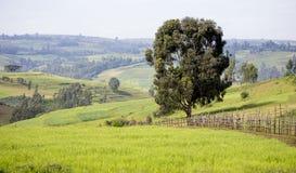 农田在农村埃塞俄比亚 免版税库存图片