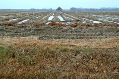 农田在冬天。 库存图片