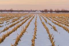 农田在冬天 免版税库存图片