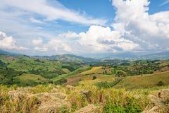 农田在北泰国 库存照片