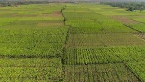 农田在印度尼西亚 股票录像