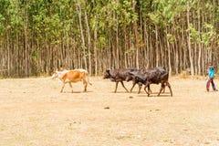农田在埃塞俄比亚 免版税库存照片
