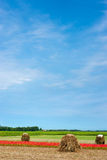 农田在夏天 库存图片