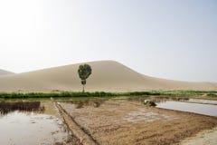 农田在沙漠 图库摄影