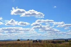 农田在蓝色云彩被填装的天空下 库存照片
