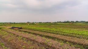 农田在越南 免版税库存图片