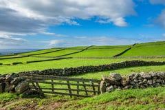 农田在Terceira海岛在亚速尔群岛 免版税库存照片