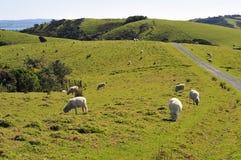 农田新的全景宽西兰 免版税库存照片