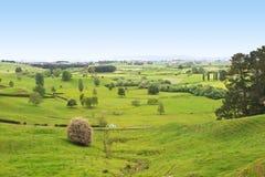 农田新的谷西兰 免版税库存照片