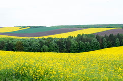 农田用菜子和年轻麦子和年轻向日葵 库存照片