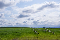 农田绿色 图库摄影