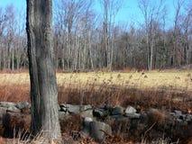 农田被耕的树干 免版税库存图片