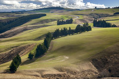 农田,南岛,新西兰 免版税库存照片