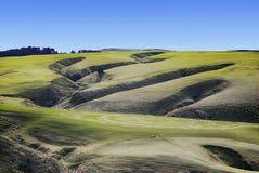 农田,南岛,新西兰 免版税图库摄影