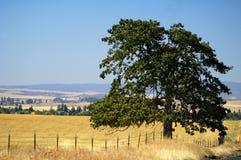 农田, Goldendale, WA 免版税库存照片