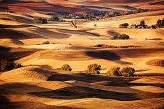 农田, Palouse,华盛顿 免版税库存照片