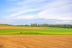 农田-棕色领域,绿色草甸 图库摄影