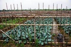 农田 免版税图库摄影