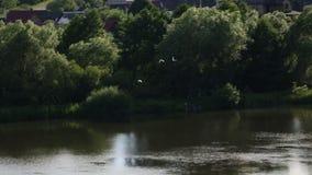 农舍入口的镜象反射 海鸥鸟 桥梁风景 慢的行动 湖河池塘 股票录像