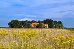 农舍和黄色野花领域 库存照片