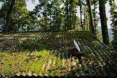 农舍遮荫地衣隐蔽的屋顶在晴朗的冬天 免版税库存照片
