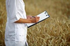 农艺师或一名学生有文件的在她的手上在麦田 库存照片