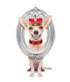 冠国王狗 库存图片