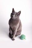 冥想灰色羊毛的球猫 图库摄影