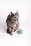 冥想灰色羊毛的球猫 库存照片