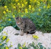 冥想的野生猫 库存照片
