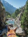 冥想美妙的风景的狗 免版税库存图片