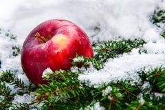 冬天、杉木和苹果 库存图片