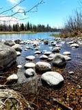 冬天、枝杈、河和鹿DOF 库存照片