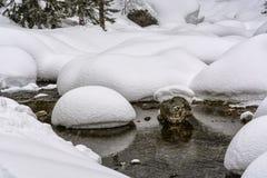 冬天、taiga、随风飘飞的雪和小河 免版税库存图片