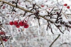 冬天。冰。 免版税库存照片