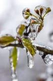 冬天。冰。 库存图片