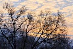 冬天一棵树的早晨和剪影与鸟的 免版税库存图片