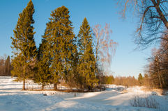 冬天下午。 库存照片