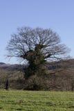 冬天下午树 库存图片